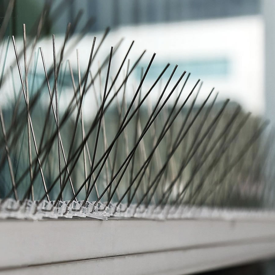best bird spikes online store